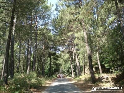 Pinares de Piedralaves; la casa del bosque tiendas montaña madrid laguna grande de gredos